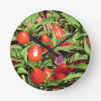 Red chili peppers hanging on the plant round clock