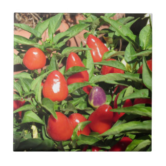 Red chili peppers hanging on the plant tile