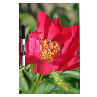 Red Chinese peony flower Dry Erase Boards