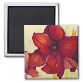 Red Christmas Amaryllis Square Magnet