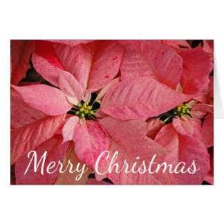 Red christmas poinsettia flowers card