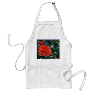 Red Chrysanthemum Standard Apron