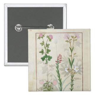 Red clover & Aube Bellidis Onobrychis & Hyssopus 2 Inch Square Button