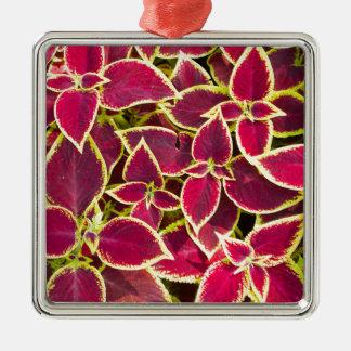 Red Coleus plants closeup Silver-Colored Square Ornament