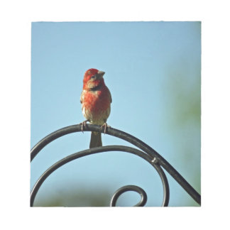Red Colored Finch on Black Wrought Iron Pole Notepad