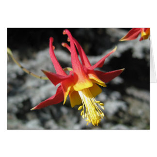 Red Columbine Note Card