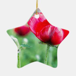 Red corn poppy with flower bud ceramic star ornament