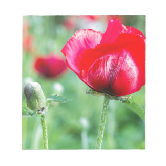 Red corn poppy with flower bud notepads