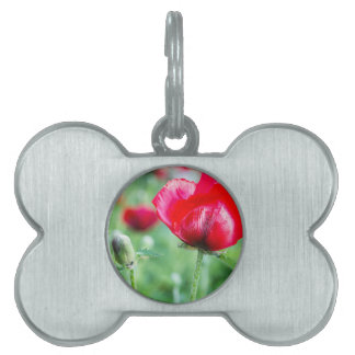 Red corn poppy with flower bud pet ID tag