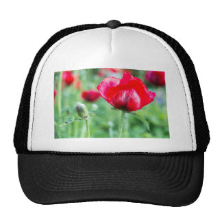 Red corn poppy with flower bud trucker hat