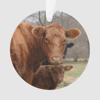 red cow with her Calf