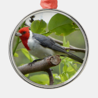 Red-crested Cardinal Metal Ornament