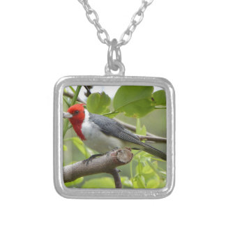 Red-crested Cardinal Silver Plated Necklace