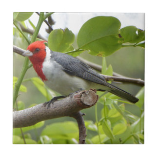 Red-crested Cardinal Tile