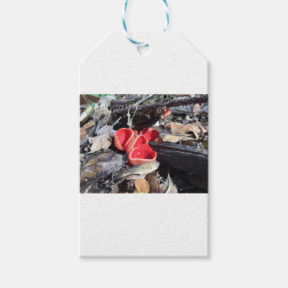 Red Cup Fungus Pack Of Gift Tags