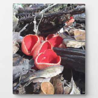Red Cup Fungus Plaque