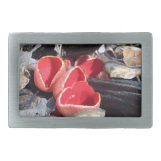 Red Cup Fungus Rectangular Belt Buckles