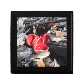 Red Cup Fungus Trinket Boxes