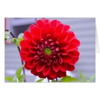 Red dahlia flower card