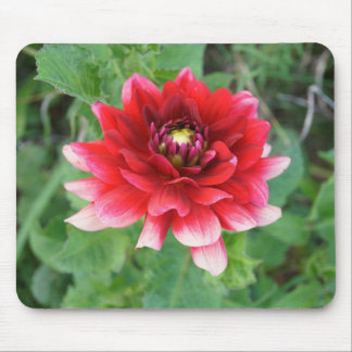 Red Dahlia Flower, Mousepad