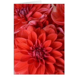 Red dahlia flowers print greeting card