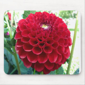 RED DAHLIA MOUSE PAD