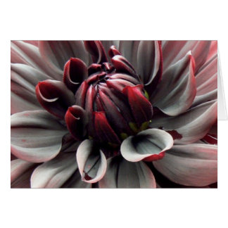 Red Dahlia Thank You Card