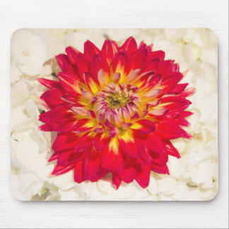 Red Dahlia With White Hydrangea Mousepad