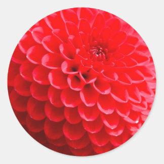 Red Dahlias in the Summer Classic Round Sticker
