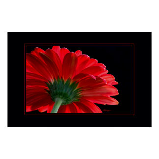 Red Daisy23x35 Poster