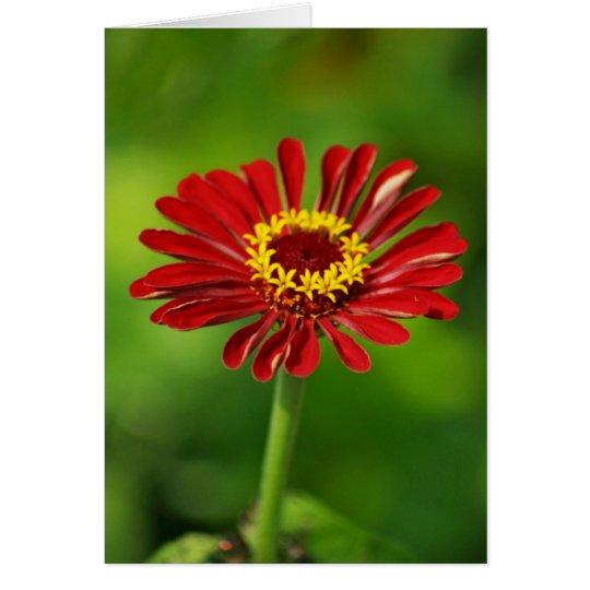 Red Daisy Card