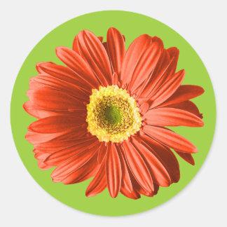 Red Daisy Flower Round Sticker