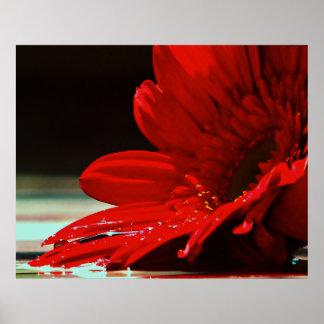 Red Daisy Gerbera Flower Poster