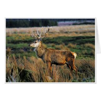 Red Deer Notecard