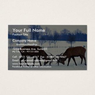 Red deer stags locking horns, Nottingham, England Business Card