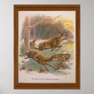 Red Deer Vintage Illustration 19th Century Artwork Poster
