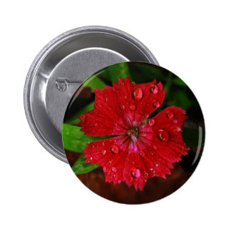 Red Dianthus With Raindrops 2 Inch Round Button