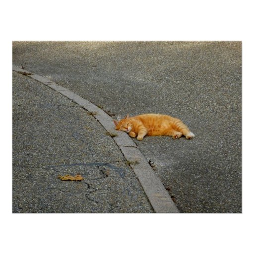 red domestic cat lies on the road poster