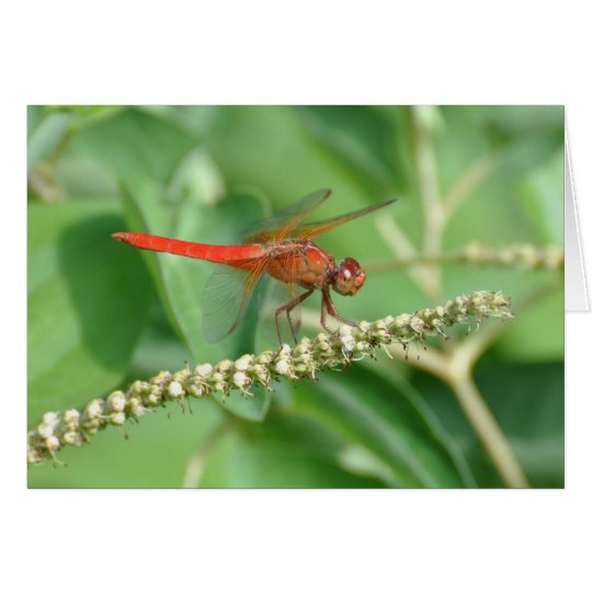 Red Dragonfly Card
