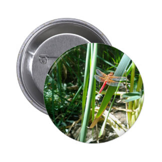 Red Dragonfly Clinging on a Leaf 2 Inch Round Button
