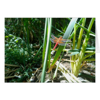 Red Dragonfly Clinging on a Leaf Card