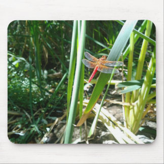 Red Dragonfly Clinging on a Leaf Mouse Pad