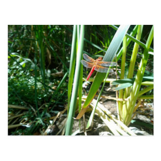 Red Dragonfly Clinging on a Leaf Postcard