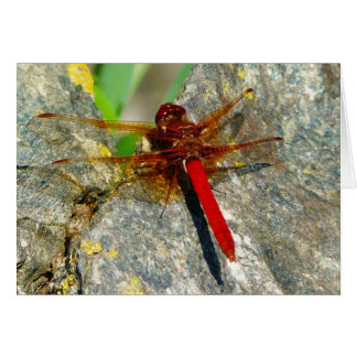 Red DragonFly or Damselfly Insect Photo Greeting Card