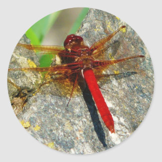 Red DragonFly or Damselfly Insect Photo Stickers