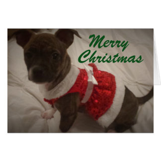 Red Dress Puppy Card