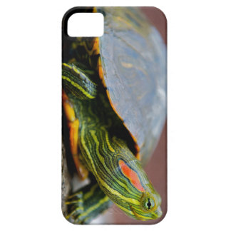 Red-eared Slider Side View iPhone 5 Covers