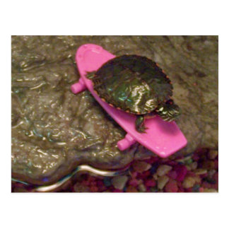 Red Eared Slider Turtle Riding Skateboard Postcard