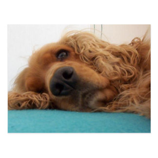 red english cocker spaniel 2.png postcard
