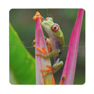 Red-eye tree frog, Costa Rica 2 Drink Coaster Puzzle